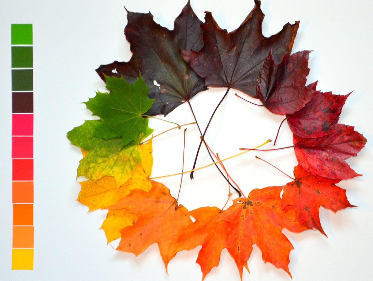 Kỹ thuật thiết kế Thiết kế đồ họa (Visual design)  Bài 2: Sự hài hòa về màu sắc và phương pháp phối màu